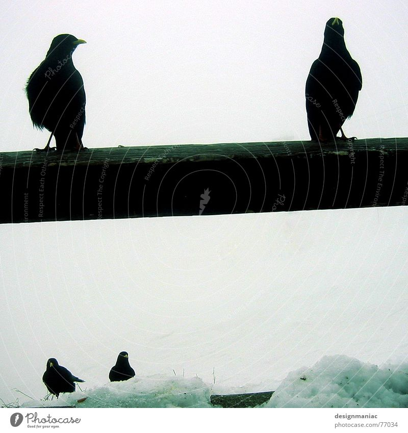 Nature White Animal Black Far-off places Dark Cold Mountain Snow Death Bright Bird Ice Fog Sit Wait