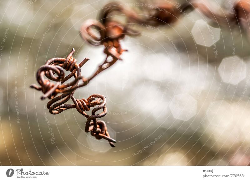 barbed wire wrenching Art Steel Rust Glittering Exceptional Creepy Brown Barbed wire Wire Muddled Plaited Futile Colour photo Subdued colour Exterior shot
