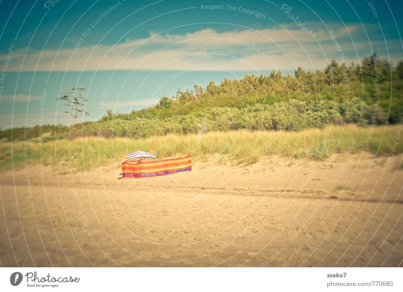 Vacation & Travel Colour Summer Loneliness Beach Forest Warmth Beautiful weather Baltic Sea Dune Sunshade Hiding place