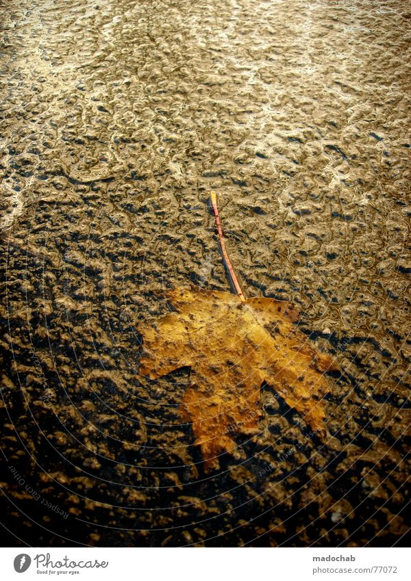 DROP IT! Embarrassing Hideous Uncomfortable Leaf Maple tree Asphalt Autumn Seasons Rain Cold Wind Passion Hope Impression Agitated Watertight Evil Frigid