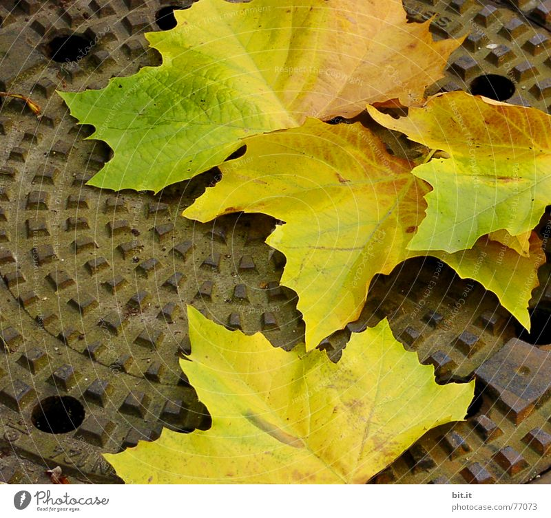 how deep can you actually fall? SECOND Downward Gully Autumn Leaf Moody Rotation Tree Multicoloured October November Impression Month Year Seasons Economic boom