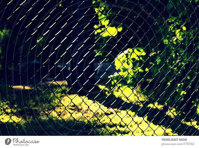 Sun netting: A wire mesh fence with light reflections in front of a park in lush green with bright and shady areas Freedom Summer Garden Environment Nature