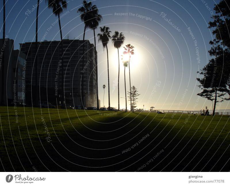 Sky Beach Park USA Palm tree California San Diego County
