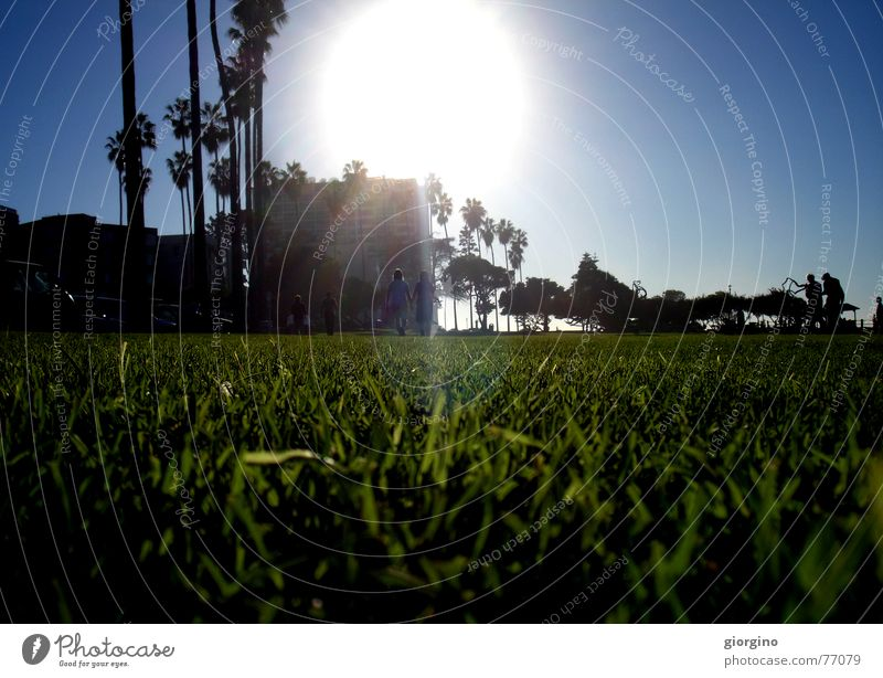 Sun of San Diego part2 Palm tree Beach Park Light Sky sun grass ocean San Diego County USA America contra-jour outdoor shooting contrast clouds walk