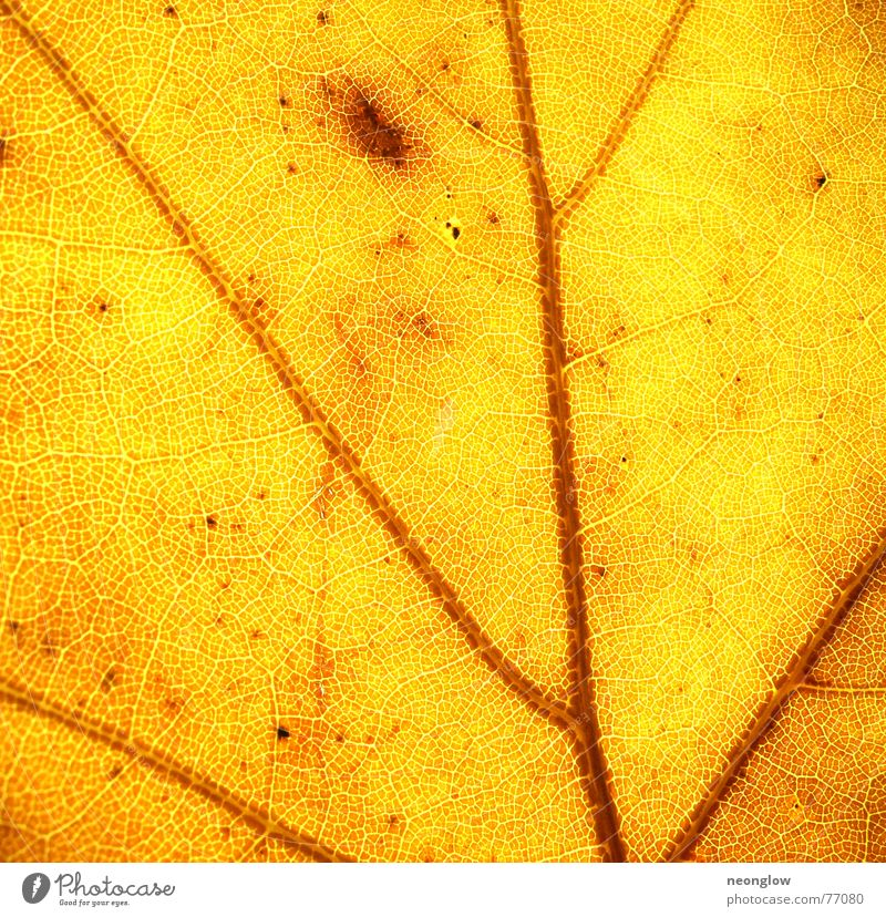 Leaf Yellow Lamp Autumn Moody Brown Gold Blood Vessel