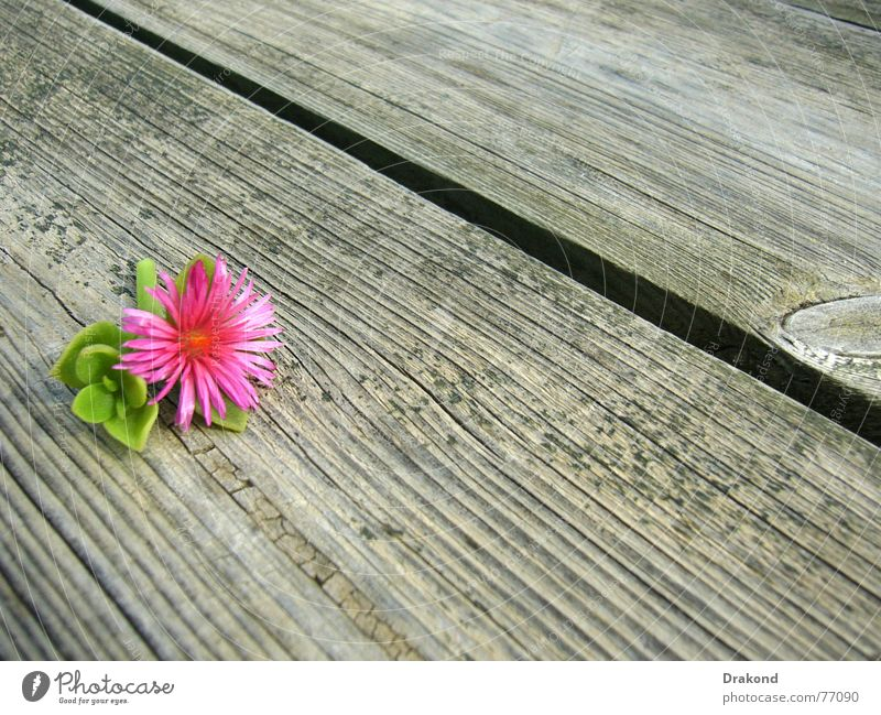 Autumn flower Wood flour Summer Nature Jump Dance floor Pink Spain Flower Spring Plant Floor covering Green Tree Table Plank Andalucia floors planks flowers