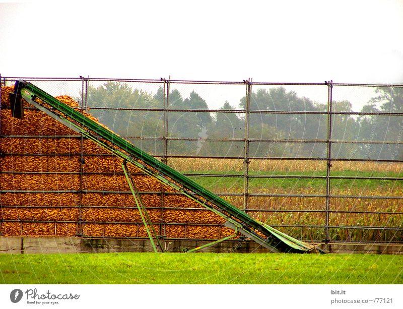 Harvest Stack Heap Conveyor belt Maximum Corn cob Corn cultivation