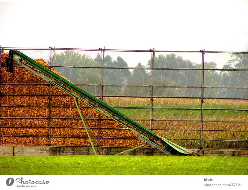 Harvest Stack Heap Conveyor belt Maximum Corn cob Corn cultivation