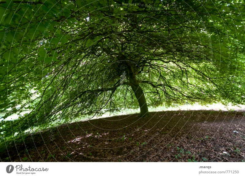 Nature Summer Tree Life Exceptional Large Perspective Beautiful weather Branch Protection Safety Environmental protection Safety (feeling of) Deciduous tree