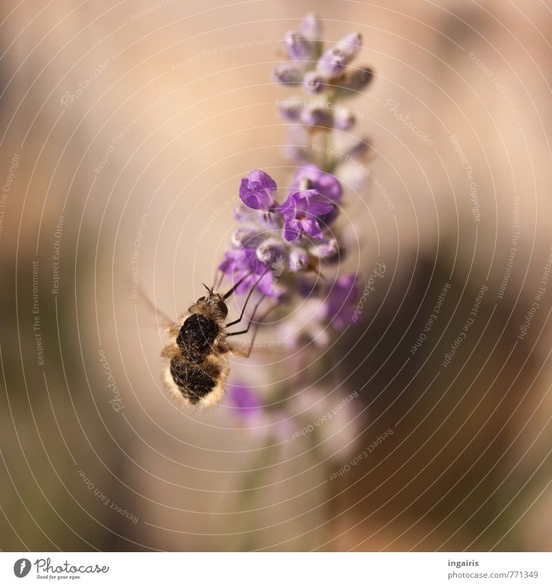 Plant Flower Animal Movement Blossom Small Brown Moody Flying Friendliness Violet Insect Near Fragrance To feed Accumulate