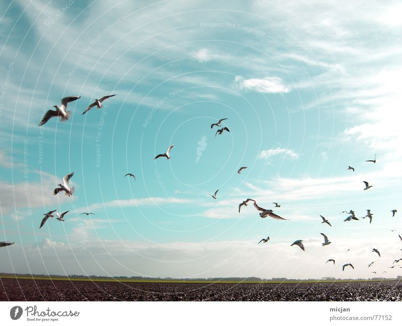 aero Nature Animal Sky Clouds Weather Field Bird Flock Flying Beautiful Many Blue Muddled Background picture Flat Plain Hover Escape Direction Seagull