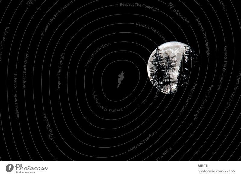 Halloween Fir tree Backwards Tree Full  moon Chur Switzerland Moon shine. shine Going