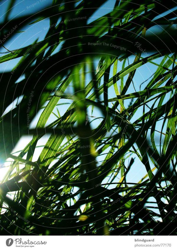 It's over my head. Grass Meadow Worm's-eye view Green White Nature Vista Sky Summer Deep Under Lawnmower Growth Wind Blue Garden Tall Sun