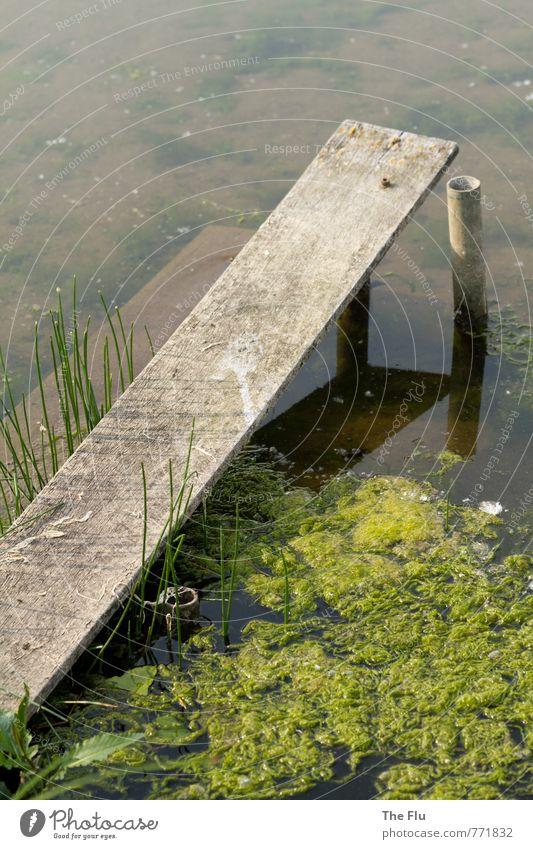 algae plague Fishing (Angle) Swimming & Bathing Sailing Environment Nature Plant Water Summer Algae Lakeside River bank Maas Deserted Navigation