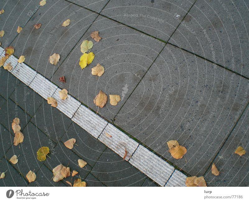 Floor: autumn edition Autumn Leaf Street Stone Crazy Sidewalk Cycle path Kiel Floor covering Tile Diagonal Colour photo Exterior shot Deserted Tilt