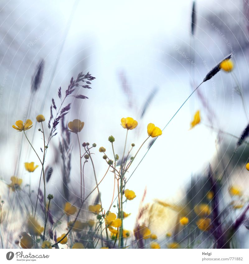 down-to-earth Environment Nature Landscape Plant Spring Flower Grass Blossom Wild plant Bud Marsh marigold Blade of grass Meadow Blossoming Stand Growth