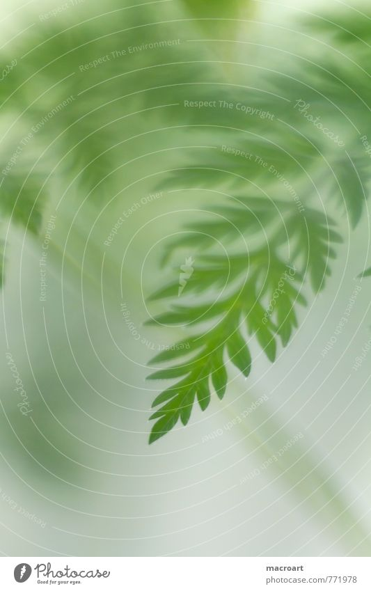 green Green Fern Leaf Nature Natural Plant Verdant Portrait format Summer Spring Growth Close-up Macro (Extreme close-up) Detail