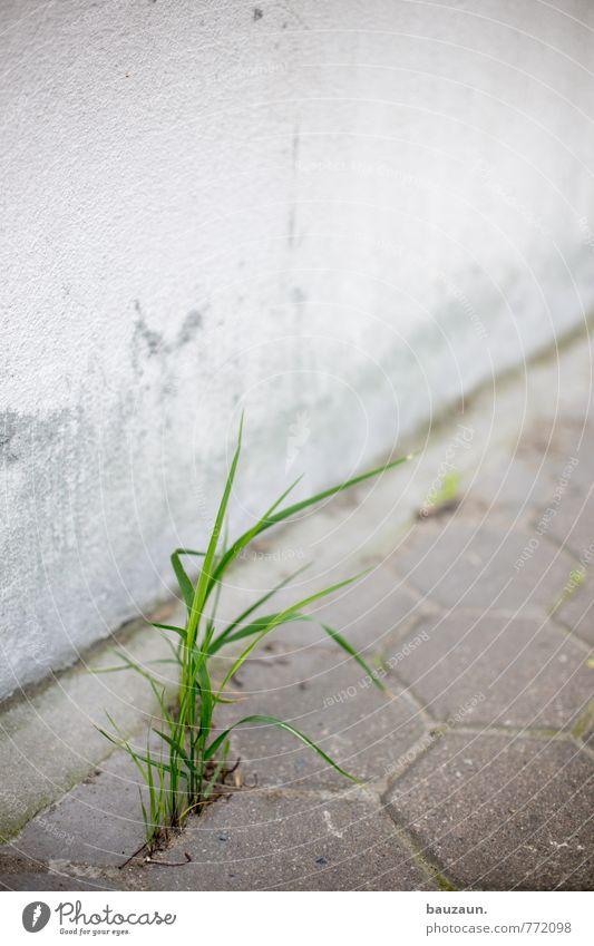 HH-peute grass. Garden Gardening Nature Grass Park Meadow Port City Downtown Places Wall (barrier) Wall (building) Facade Traffic infrastructure Street