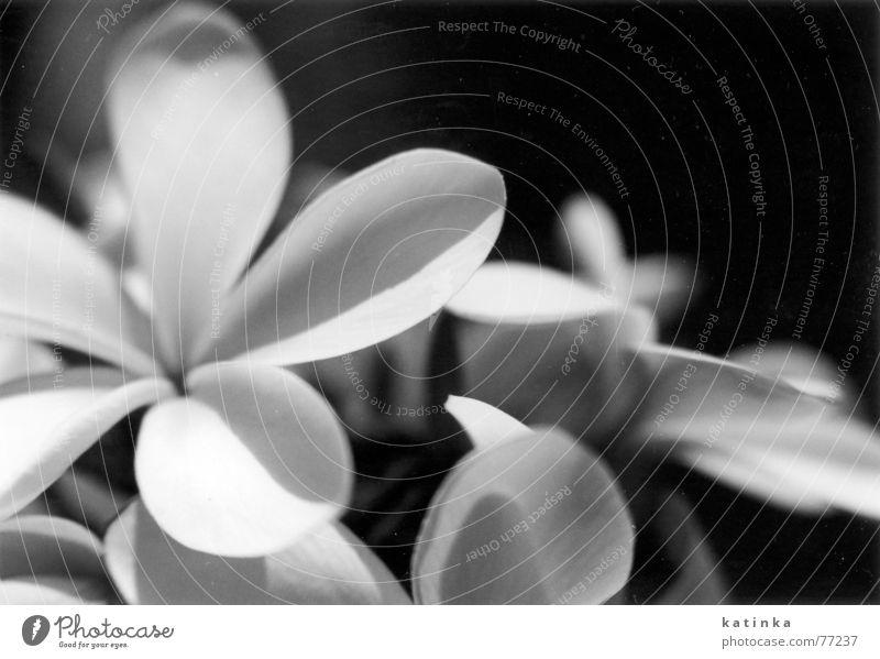 flowers Flower Summer Light Grief Spring Garden Black & white photo Shadow Freedom Blossoming Dark background