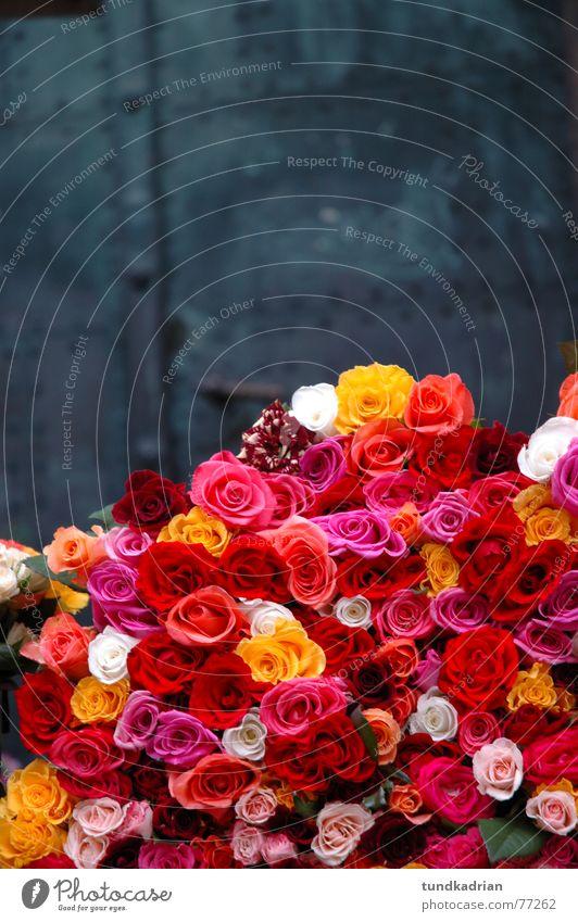Bed of Roses Gray Iron Flower Farmer's market Multicoloured Multiple Exterior shot Door cut flower Joy Many Valentine's Day