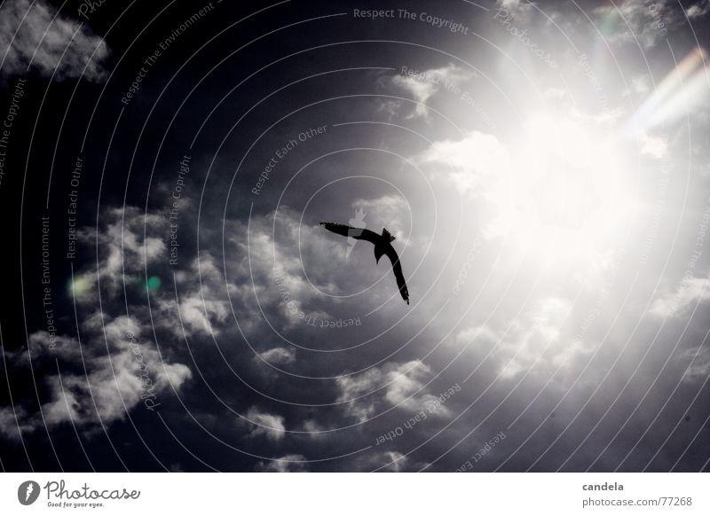 Ocean Beach Clouds Bird Flying Seagull Dazzle New Zealand Black-headed gull  Christchurch