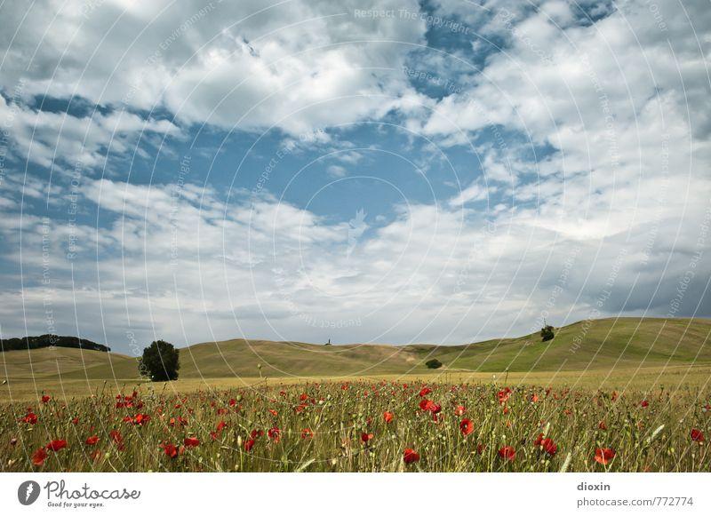 Tuscany, poppy seed amour! Environment Nature Landscape Plant Sky Clouds Summer Flower Poppy Poppy blossom Rye Rye field Poppy field Poppy capsule Rye ear Field