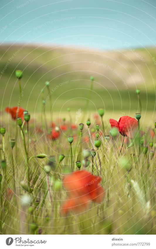 Sky Nature Blue Plant Beautiful Green Summer Red Flower Landscape Environment Blossom Field Growth Beautiful weather Blossoming