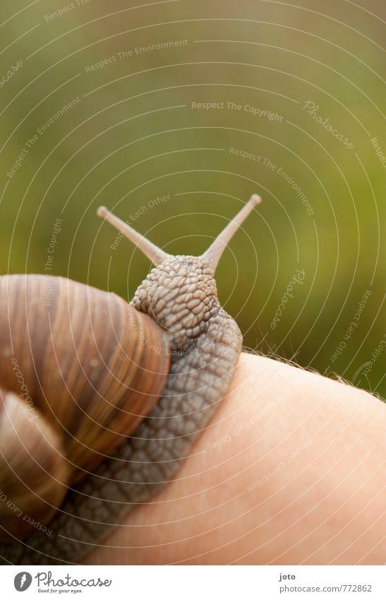 pleasantly Hand Nature Animal Summer Garden Wild animal Snail Vineyard snail Snail shell 1 Curiosity Cute Slimy Green Contentment Love of animals Calm