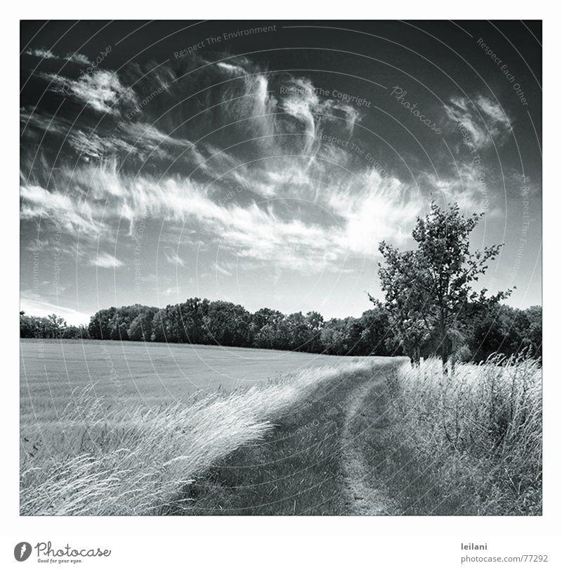 Sky Tree Clouds Meadow Lanes & trails Line Wind Europe