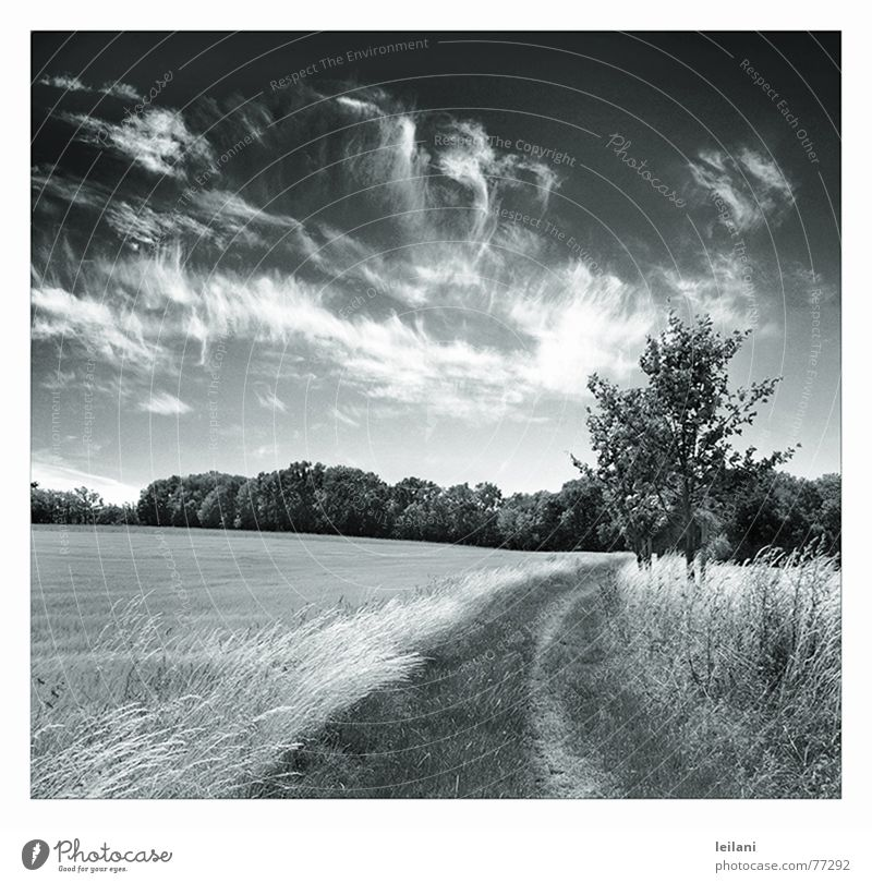 This way Clouds Meadow Tree Europe Sky Lanes & trails Wind Black & white photo Line