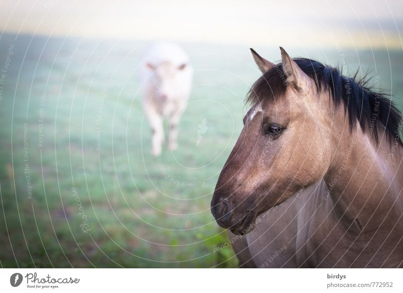 Dülmen wild horse with food competitor Nature Fog Meadow Cow Horse Wild horses 2 Animal Observe Looking Esthetic Natural Beautiful Power Brave Acceptance