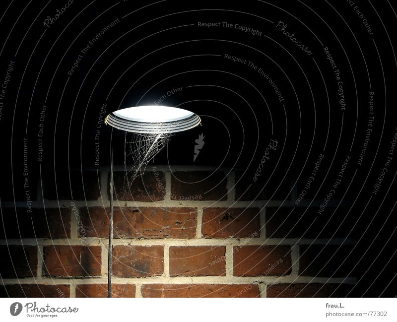 cone of light Spider's web Cable Cone of light Lamp Wind Brick Wall (building) Night Electricity Light Gust of wind Wall (barrier) Industry Things