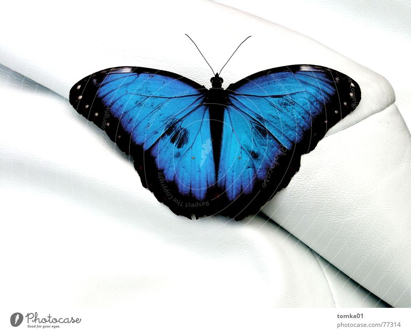 Nature Blue White Beautiful Animal Freedom Sit Interior design Living or residing Wrinkles Sofa Serene Butterfly Furniture Luxury Leather