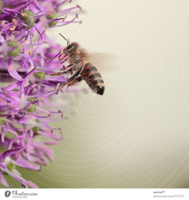 Nature Plant Animal Environment Life Blossom Natural Gray Garden Health care Esthetic Blossoming Touch Violet Insect Delicious