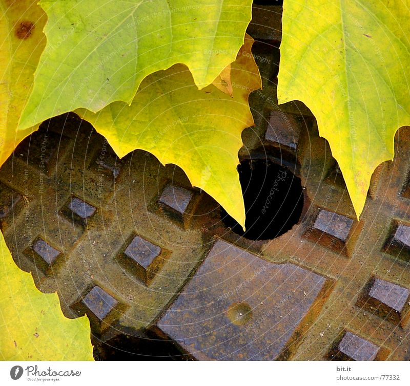 Old Leaf Yellow Autumn Moody Under Direction Rust Seasons Year Hollow Downward Iron Gully November Section of image