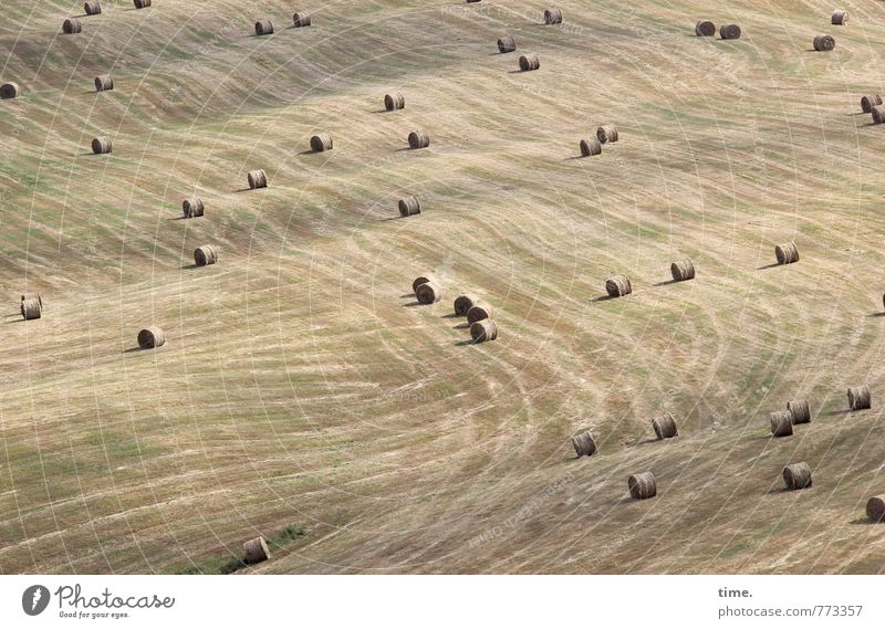 winter food Work and employment Agriculture Forestry Plant Hay Hay bale Hay harvest Field Hill Line Stripe Contentment Movement Design Fragrance Discover Serene