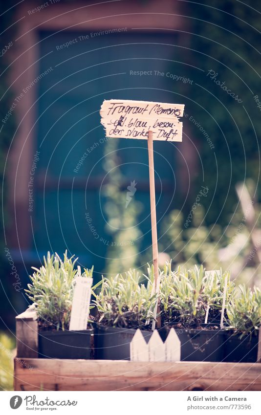 Nature Plant Flower Spring Natural Garden Park Growth Signs and labeling Shopping Organic produce Markets Sell Flowerpot Roadside calvery Lavender