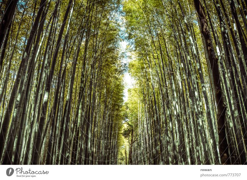 bamboo forest Environment Nature Landscape Plant Forest Exceptional Exotic Bamboo Bamboo stick Tall To go for a walk Asia Japan Opening Lanes & trails Narrow