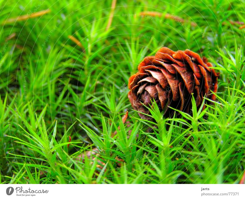 Nature Green Meadow Grass Floor covering Fir tree Fir cone