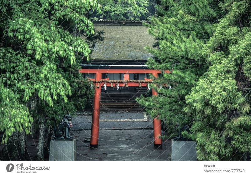 shinto shrine Tree Green Gate Shintoism Shrine Temple Holy Religion and faith Prayer Red Entrance Mystic Exotic Asia Japan Overgrown Forest Pilgrim Colour photo