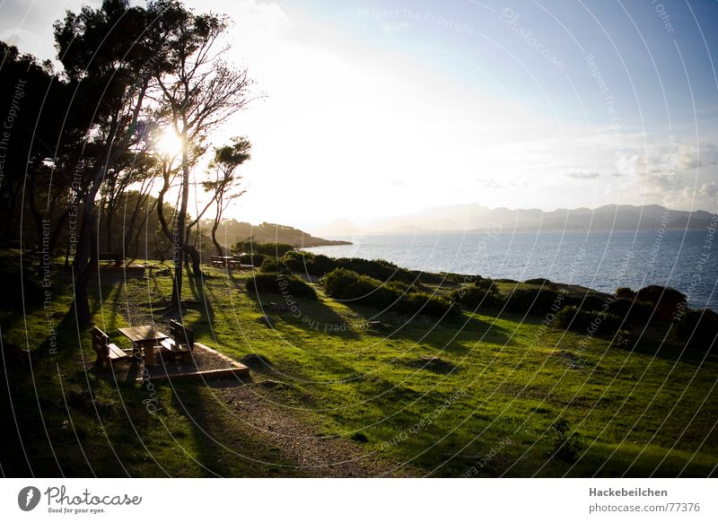 Tree Sun Ocean Beach Calm Clouds Meadow Table Places Bench Majorca Resting place