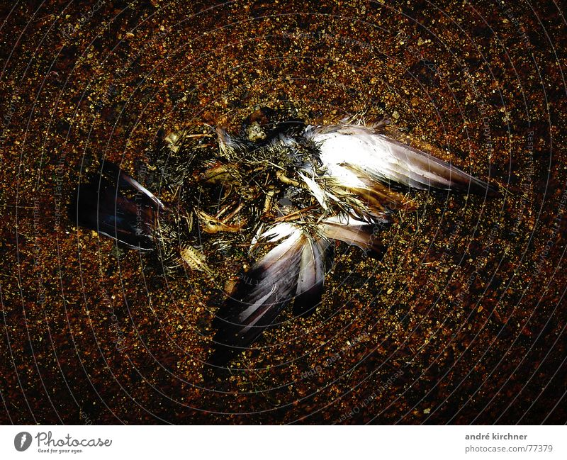 fallen Pigeon Skeleton Earth Wing Stone Dead animal
