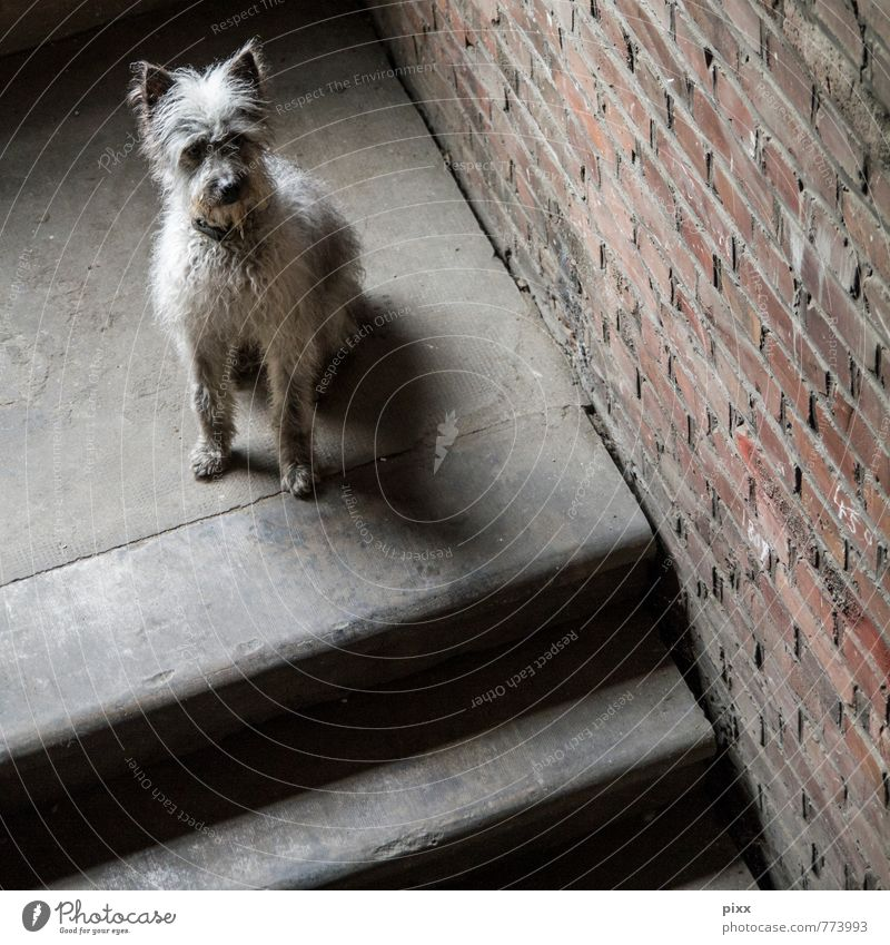Dog Calm Animal Wall (building) Sadness Interior design Wall (barrier) Gray Think Brown Friendship Stairs Sit Wait Cute Soft