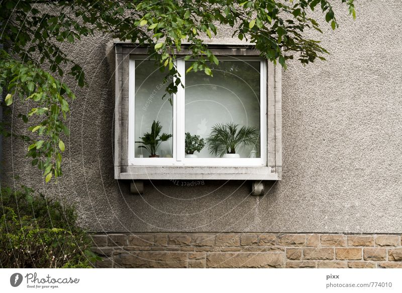 Old City Green Plant Tree House (Residential Structure) Window Wall (building) Architecture Wall (barrier) Stone Brown Flat (apartment) Facade Fear Lifestyle