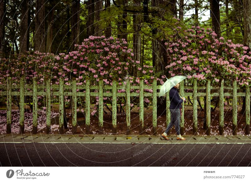 stroll Human being Feminine Young woman Youth (Young adults) Woman Adults 1 Street Wet Umbrella To go for a walk Sidewalk Fence Garden Hedge Rhododendrom Flower