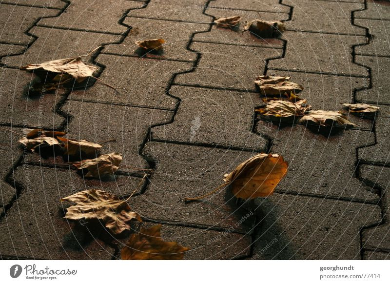 Leaf Autumn Stone Concrete Parking lot Paving stone Autumn leaves