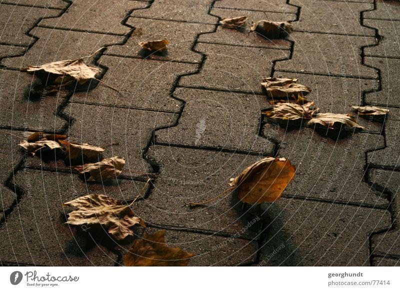 lightning fall Autumn Leaf Autumn leaves Concrete Parking lot Stone concrete paving Shadow Light (Natural Phenomenon) Paving stone