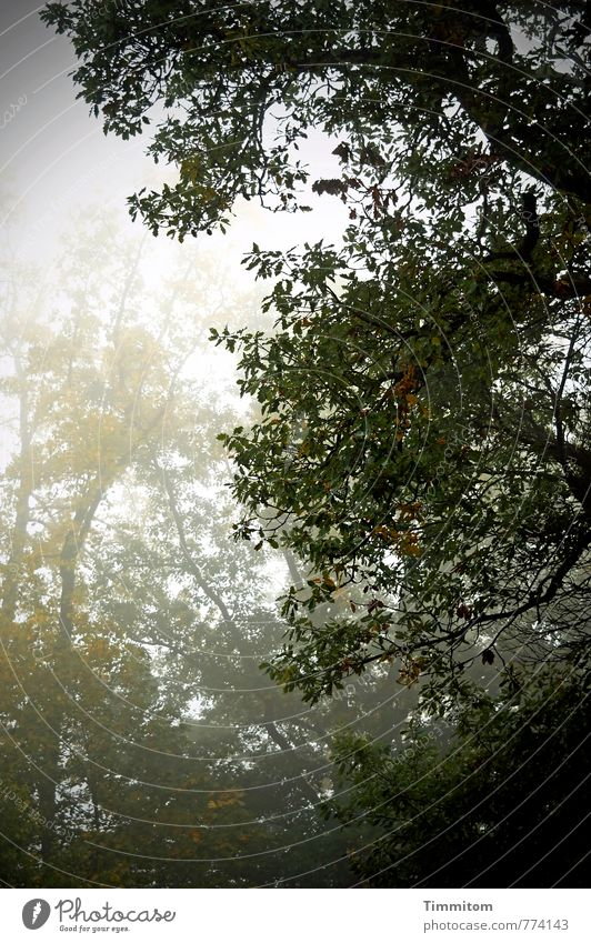 Nature Plant Green Tree Black Dark Forest Environment Sadness Autumn Emotions Gray Weather Fog Climate Bad weather