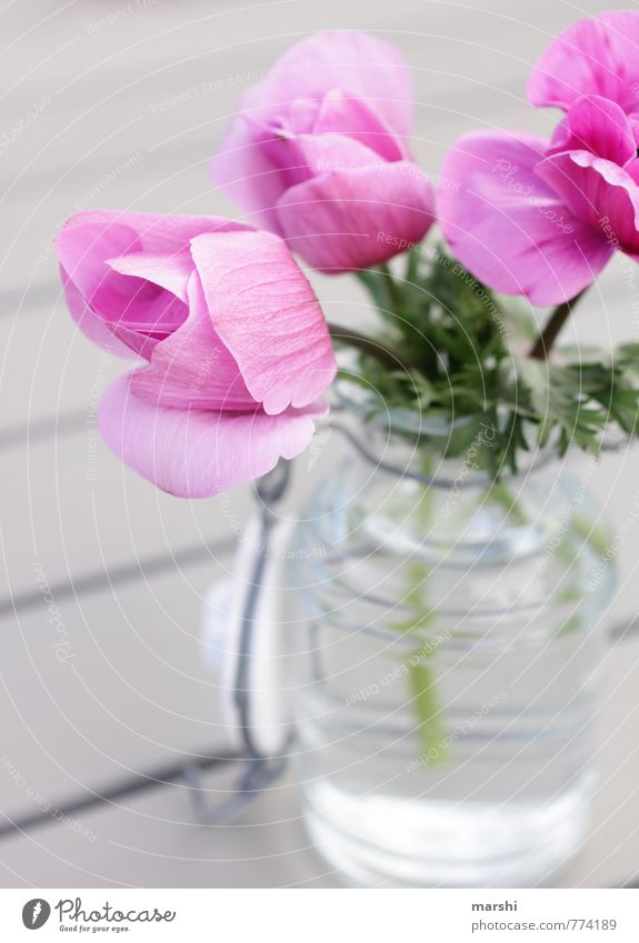 Flower greeting from the garden Nature Plant Spring Summer Pink Vase Decoration Summery Blossoming Garden Colour photo Exterior shot Close-up Detail