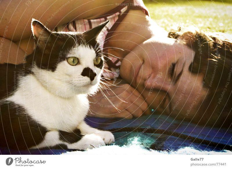 Togetherness Trust Friendship Cat Affectionate Love Lie Blanket Joy Looking